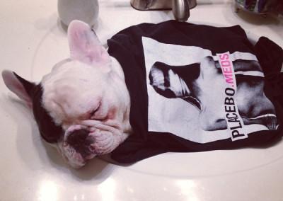 manny the french bulldog sleeping 13