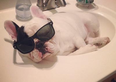 manny the french bulldog sleeping 8