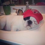 manny the french bulldog sleeping 4