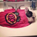 manny the french bulldog sleeping 1