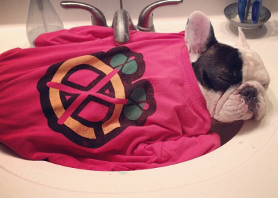 manny the french bulldog sleeping 1