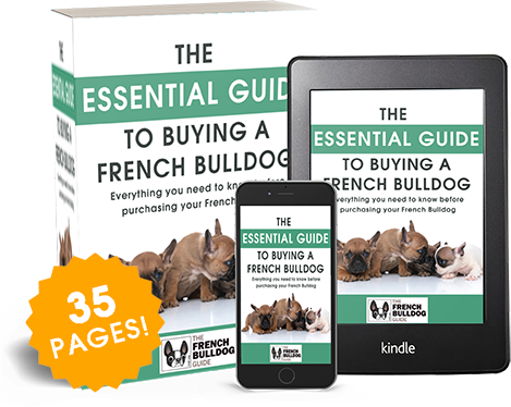 essential-guide-to-buying-french-bulldog